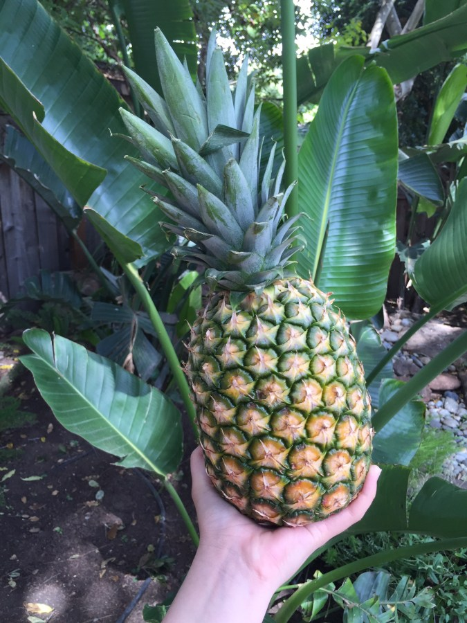 pineapples, fruit, tropical, how to make banana soft-serve ice cream