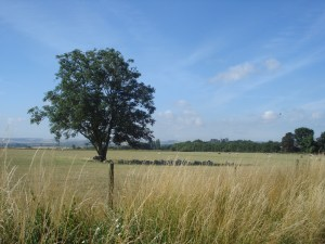 Earth Trust, walk, countryside, Oxfordshire