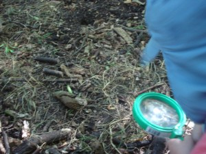 Earth Trust, Forest School, Bug hunting