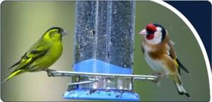 natures-feast-wild-bird-care