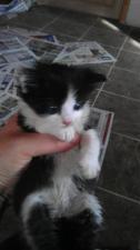 A little cutie pie