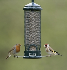 image: Nigel Blake (rspb-images.com), Big Garden Birdwatch