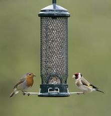 image: Nigel Blake (rspb-images.com), Big Garden Birdwatch