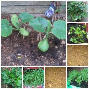 How does Monkey's garden grow