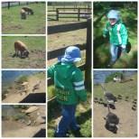 Millets Farm babies