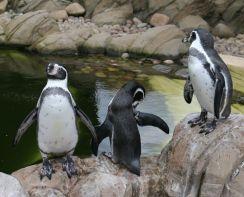 Twycross Zoo