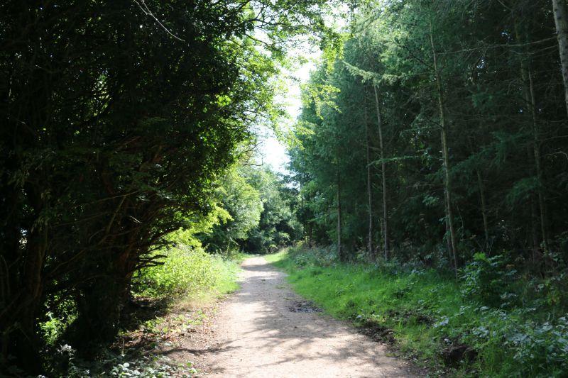 Exploring Rosliston Forestry Centre