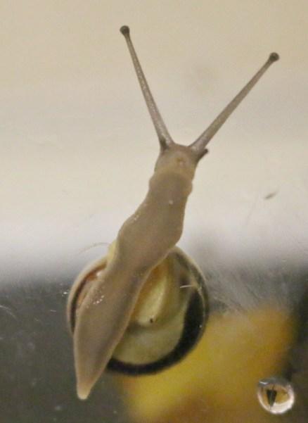 Snail World from Interplay UK