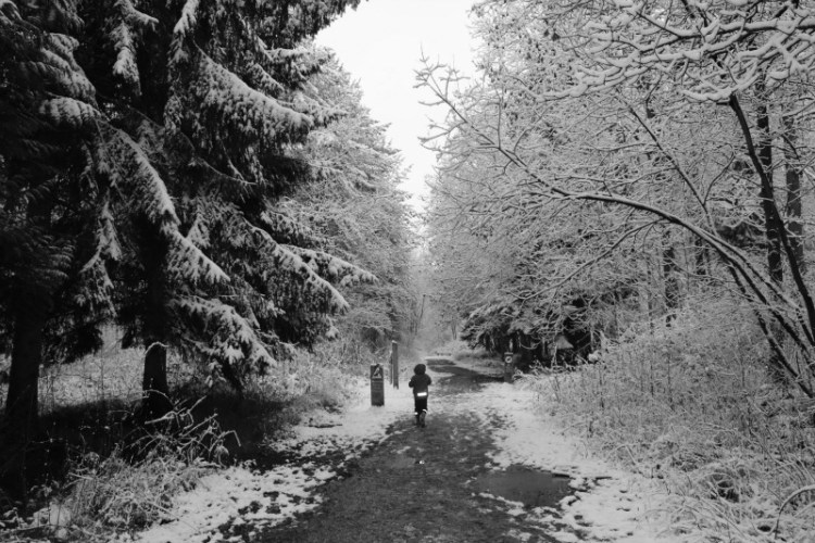 Walking in the snow in Salcey Forest