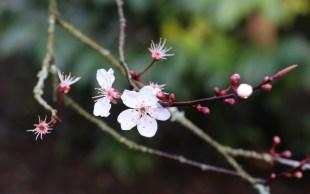 Blossom Waddesdon Manor