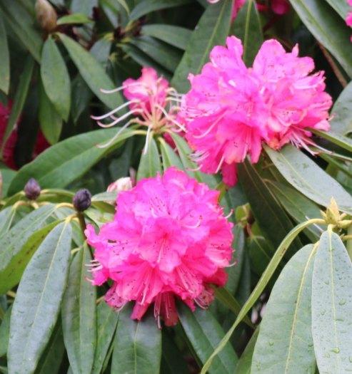 Easter at Lanhydrock flowers