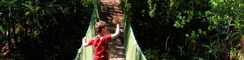 Roller coasters and suspension bridges