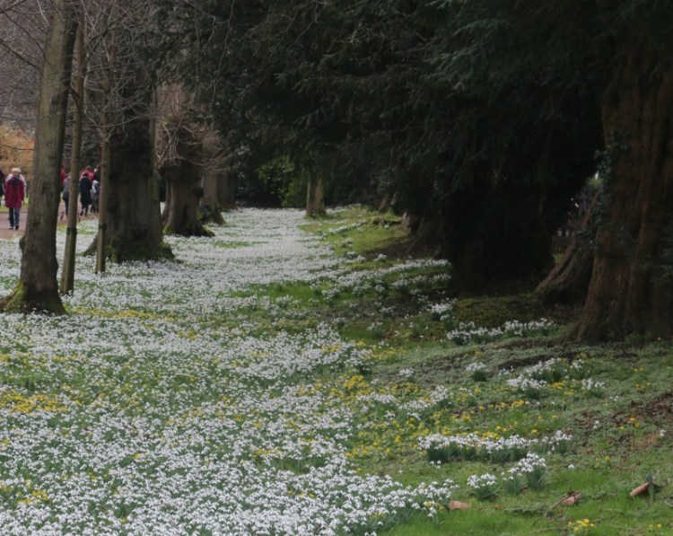 Favourite places to spot Snowdrops