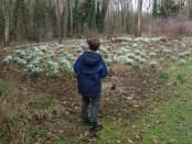 Snowdrop spotting at Evenley Wood Garden