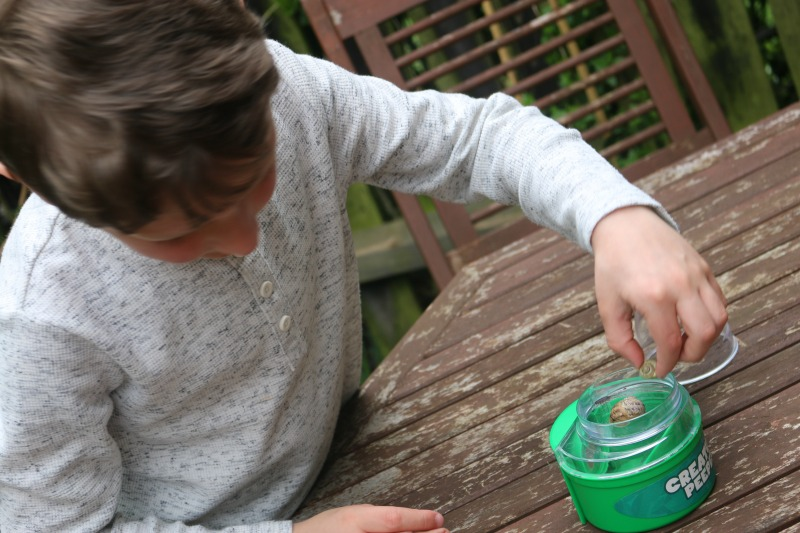 Going on a Bug Safari with The Wild Challenge from RSPB