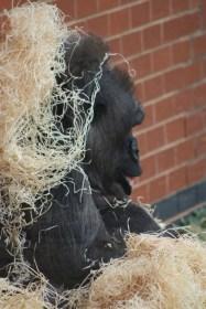 Exploring the Great Brick Safari at Twycross Zoo