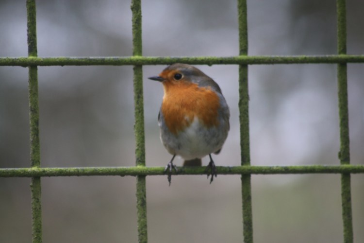 Bird on the Wire - My Sunday Snapshot 130119