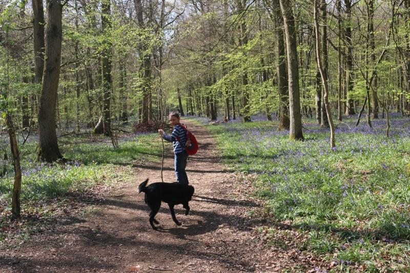 Exploring Hazelborough Wood