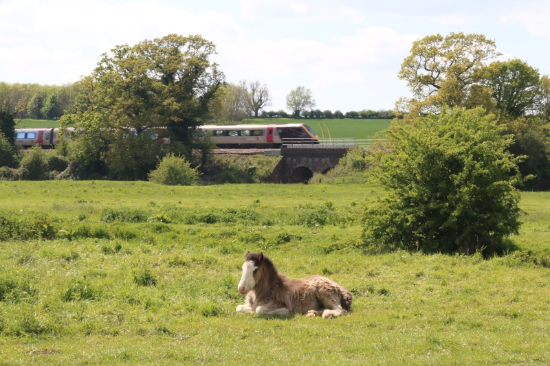 foal and train