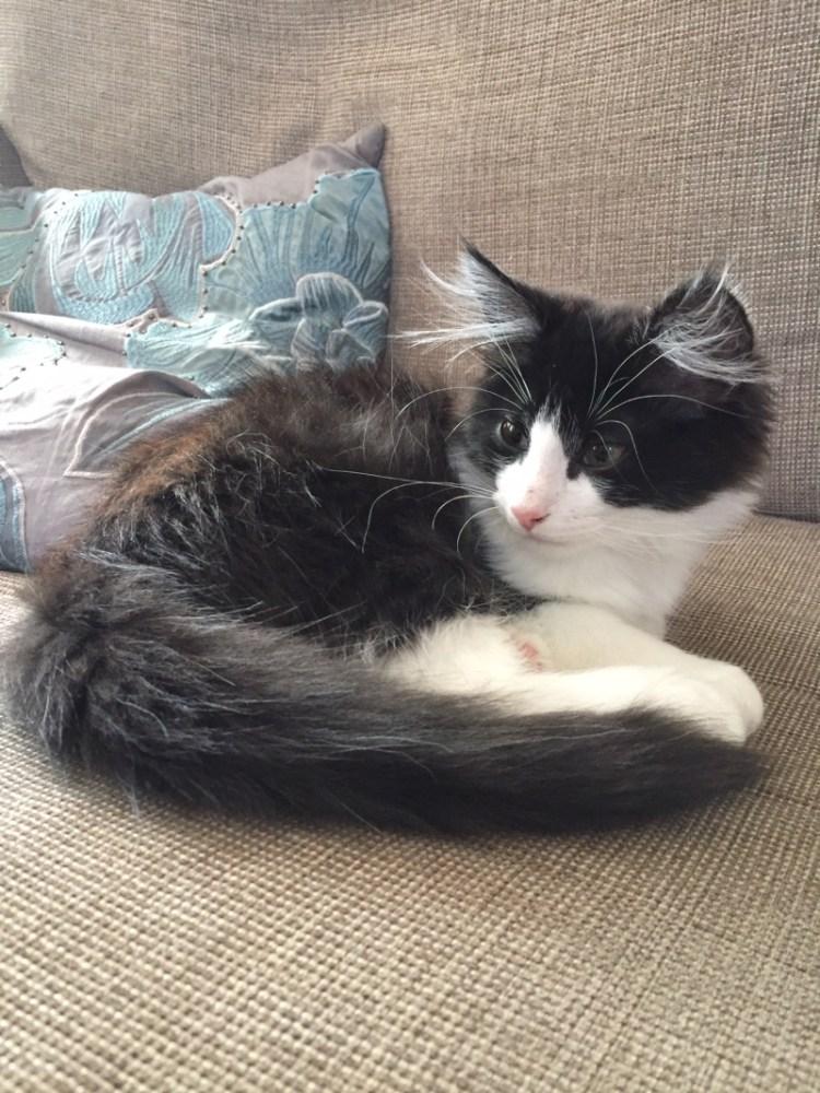 Kitten update: Paddington is 16 weeks old