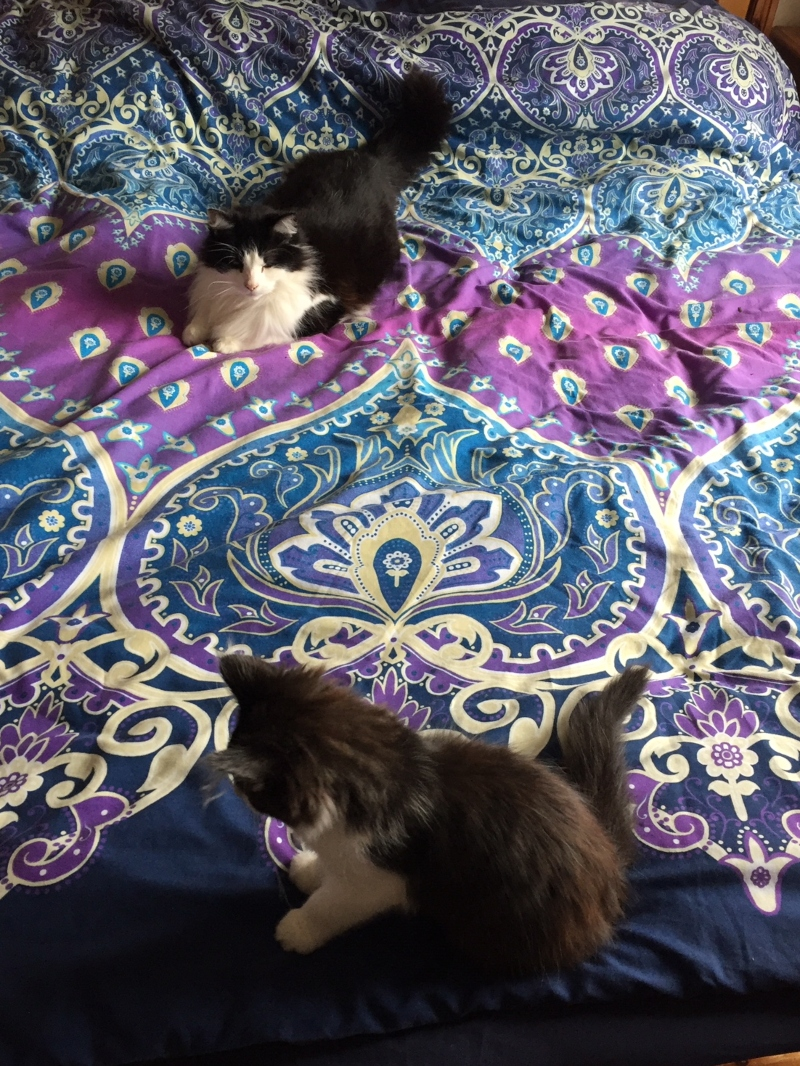 cat and kitten on bed