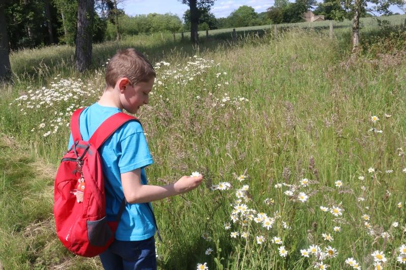admiring the wild flowers