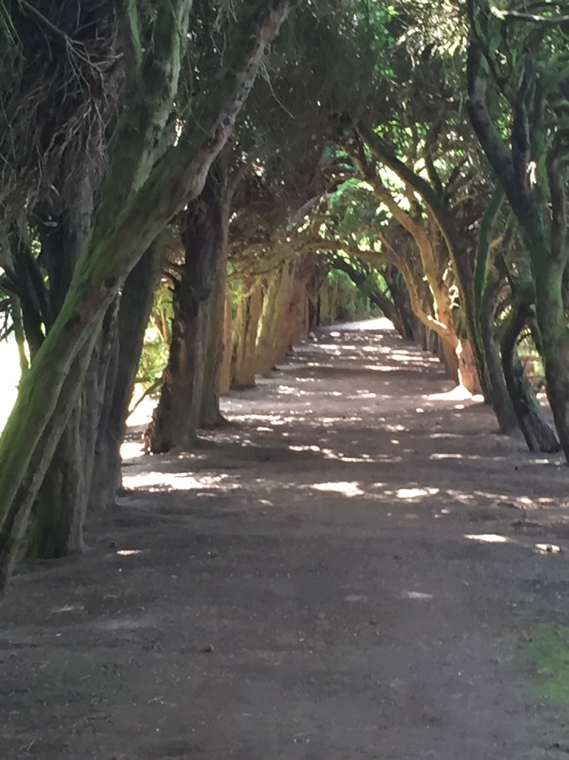 Yew Tunnel