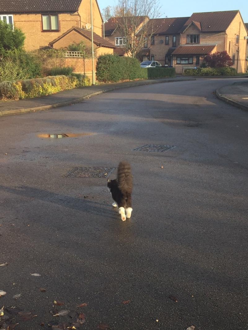 Kitten update - Paddington at eight months