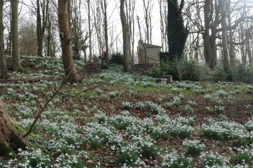 Spotting snowdrops at Painswick Rococo Garden