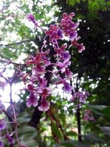 Orchid Center El Valle De Ant Panama Beautiful