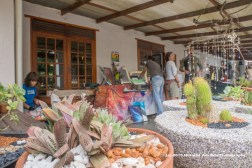Succulent plants and more of Jean Jonker