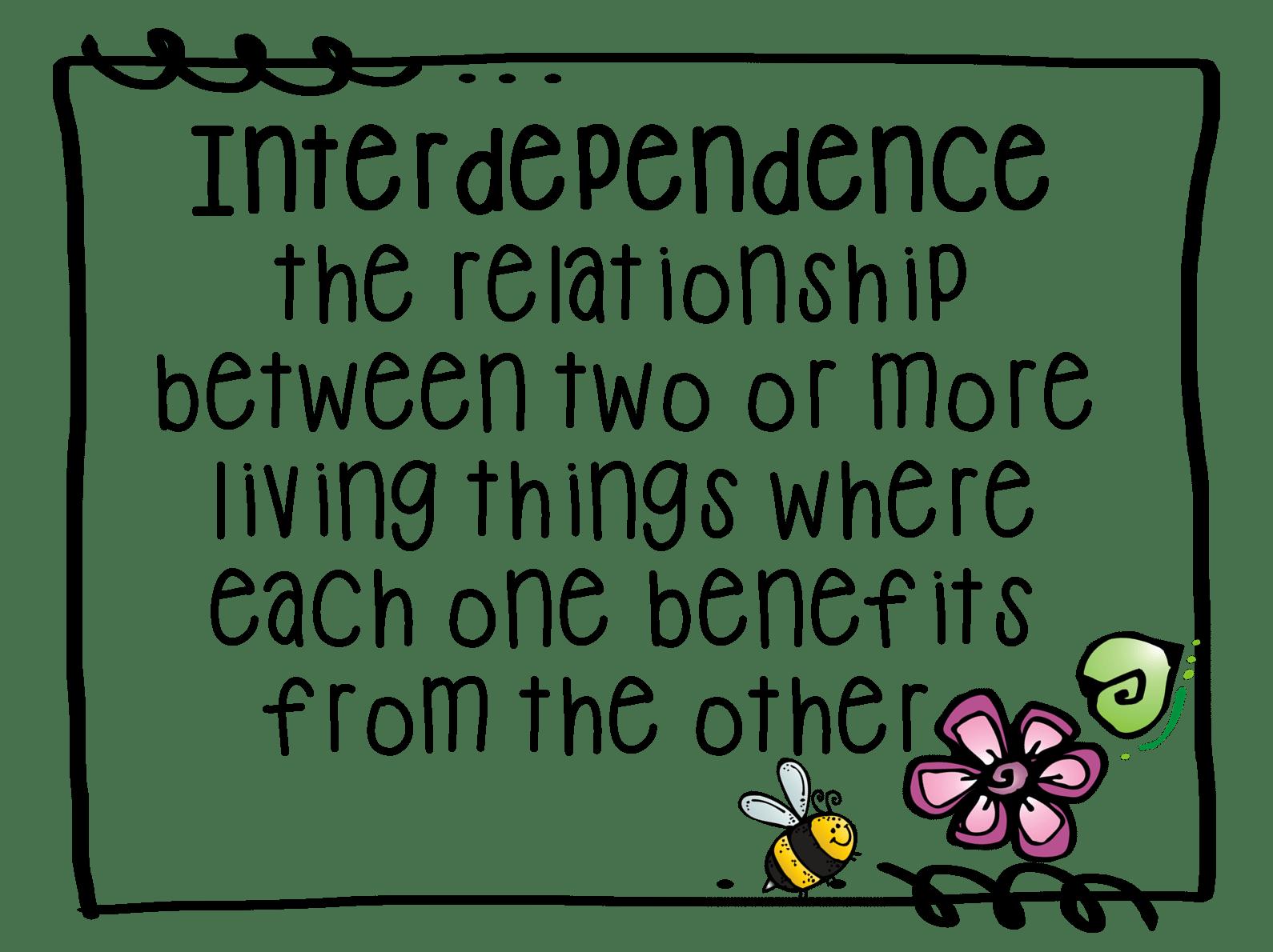 Interdependence Terrariums Interdependence