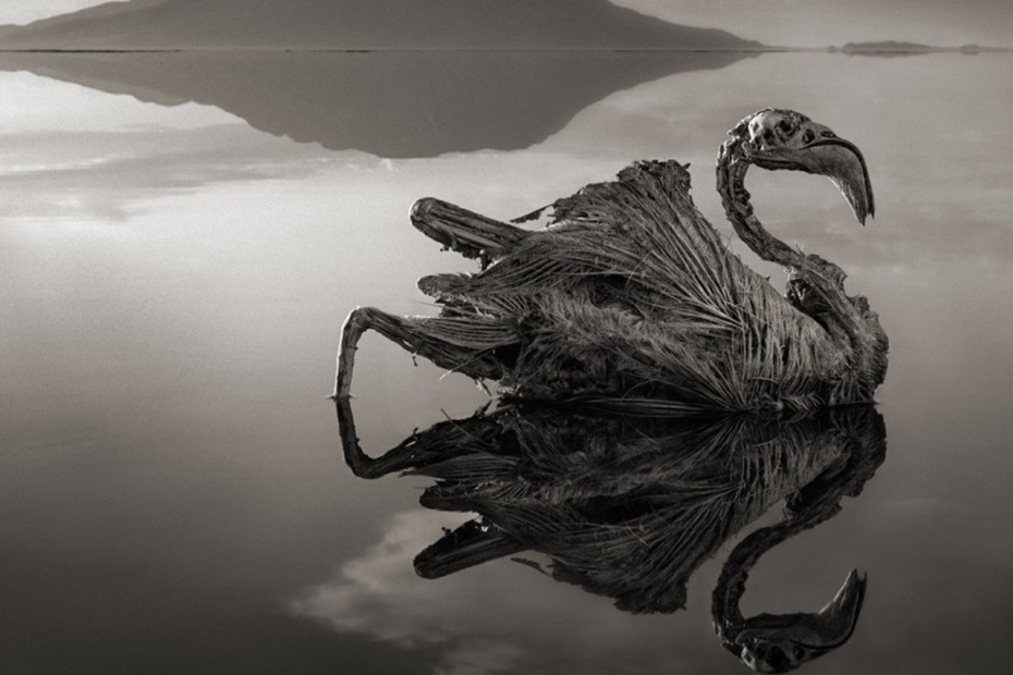 The-Calcified-Animals-of-Lake-Natron-Tanzania-1