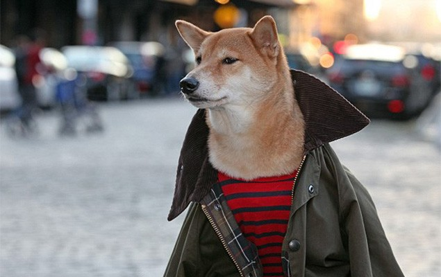 menswear-dog-is-pulling-in-15000-usd-a-month-1