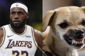 NBA 新賽季詹皇有感而發:「我的狗是怪獸!」