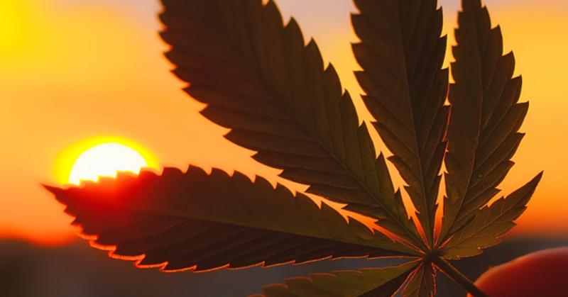 終於不再是管制毒品!撇除長年汙名化並奠定合法基礎,聯合國正式承認大麻是「醫學藥物」! – OVERDOPE 華人 ...