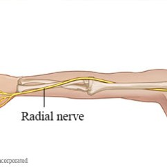 Radial Nerve Diagram 6 Flat Trailer Plug Wiring Entrapment Exercises Stretches Glides