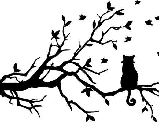 silhouet van kat in boom