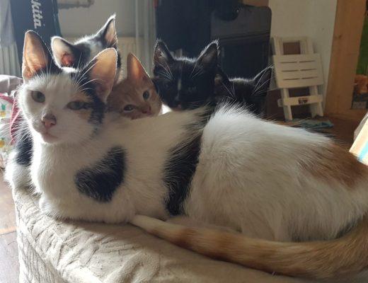 kat-kitten
