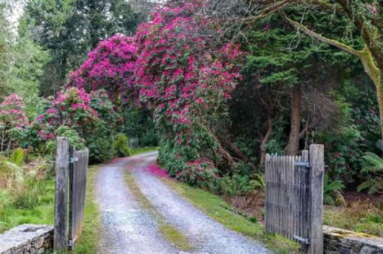 Picture of Derreen Gardens