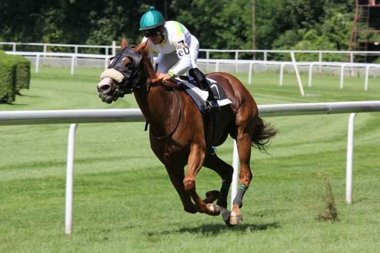 Picture of Horse Race