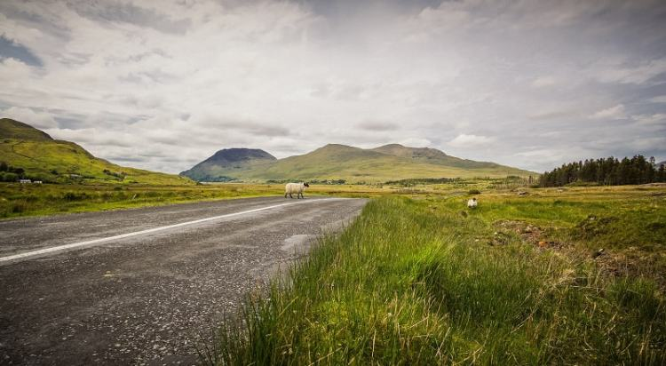 Picture of Rural Area in ireland