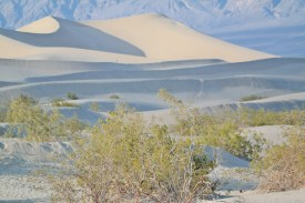 Death Valley - Mesquite Flat Dunes