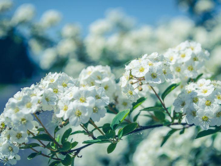 bloom, flower, sun