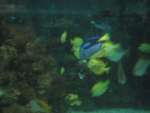 manyfish