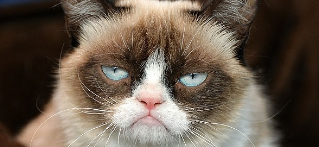 The Grumpy Cat Movie Trailer is the Best Worst Thing You'll See Today