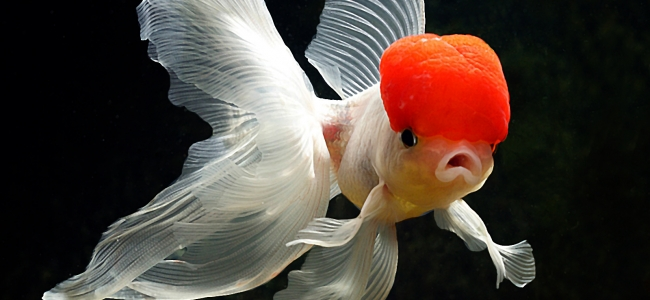 Fish Should Play Every Video Game!