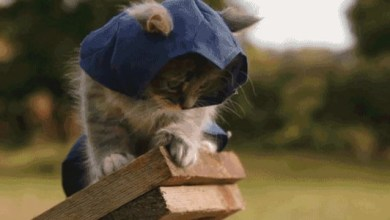 Assassin's Creed with Kittens Is Adorably Deadly