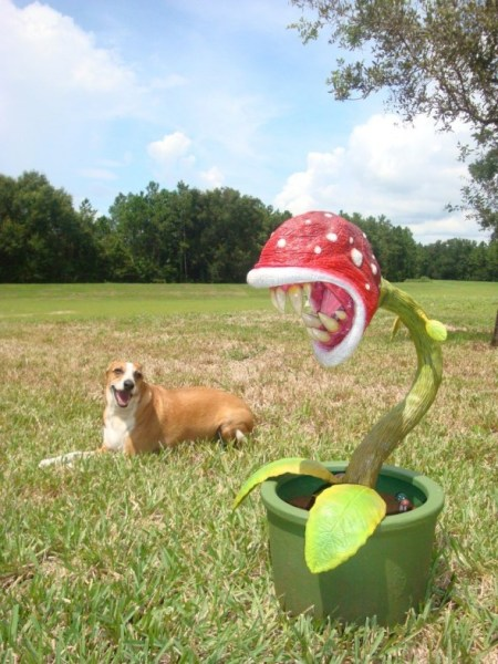 real life piranha plant 2