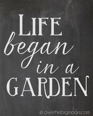 Life began in a garden chalkboard